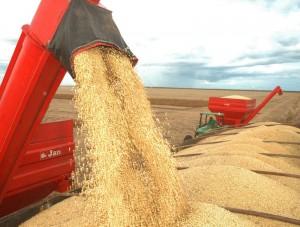 ESTIMATIVA DO IBGE Safra de grãos deve ser 13,2% maior em 2013